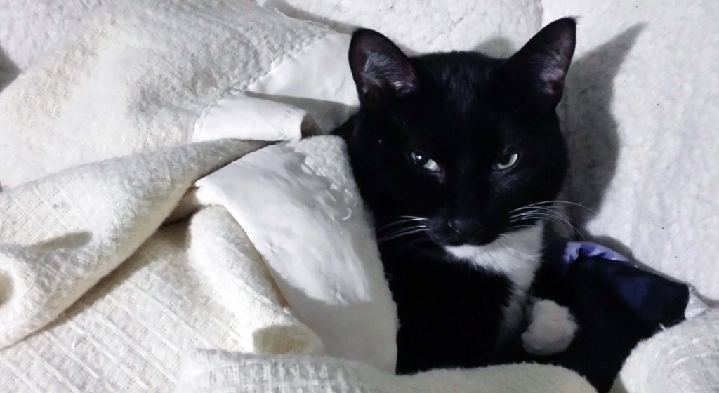 A tuxedo cat curled up with a white blanket.