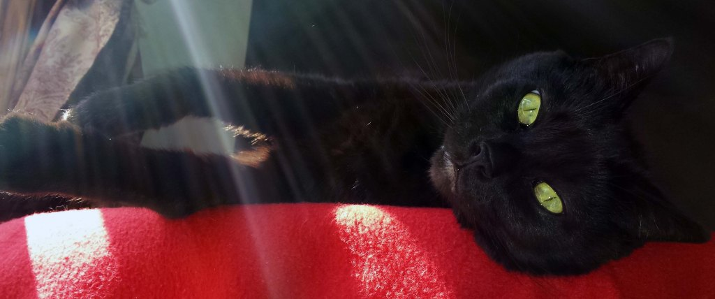 A black cat with green eyes lying on his side on a red blanket with sunbeams shining down on him.