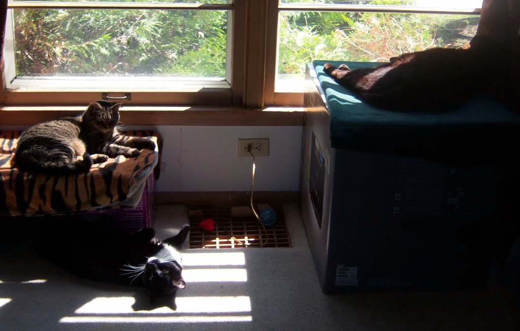 A tabby lying on a box draped with a tiger-stripe towel on the left. A tuxedo cat on his back on the floor by her, and a black cat on a box draped with a green blanket. They're all by a sunlit window.