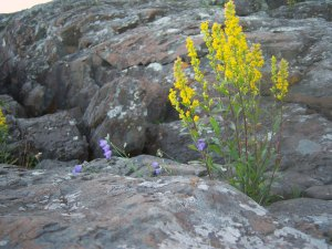Yellow and purple flowers growing out of rocks