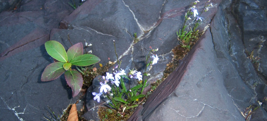 Flowers growing from stone